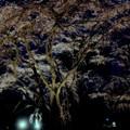 春の夜の夢