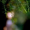 森の妖精の哀しみ
