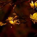 晩秋にひとり