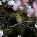 Photos: Spring stage