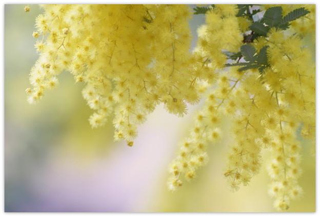 Lemon yellow love