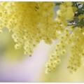 Photos: Lemon yellow love