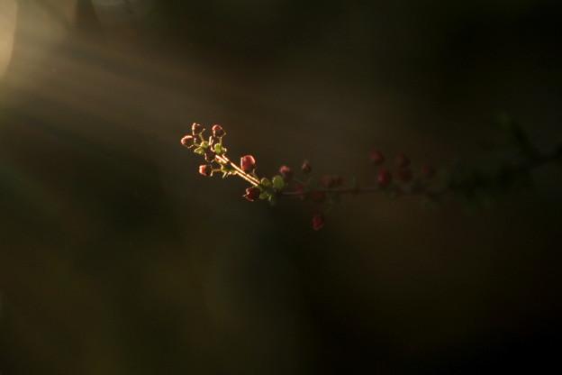 Photos: 光に向かって~