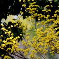 Photos: 春だもの~