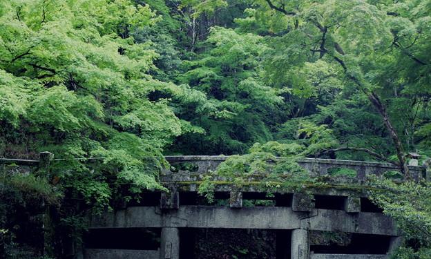 Photos: 緑のうねり