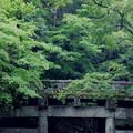 緑のうねり