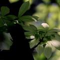 Photos: 癒しの森