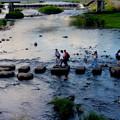 Photos: 鴨川の風物詩