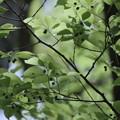 Photos: 春の匂い