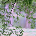 Photos: ミント色の風が吹く