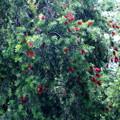 ブラシの森