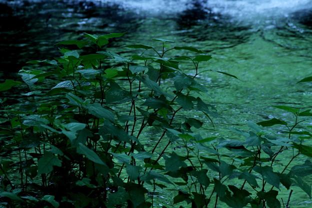 深~い深い緑