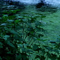 Photos: 深~い深い緑