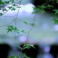 Photos: 日本の夏