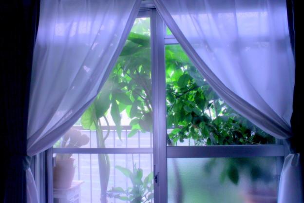 Green curtain