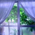 Photos: Green curtain