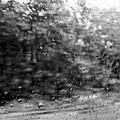 Photos: 雨の車窓から