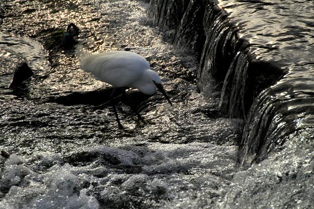 Photos: 水の流れ~