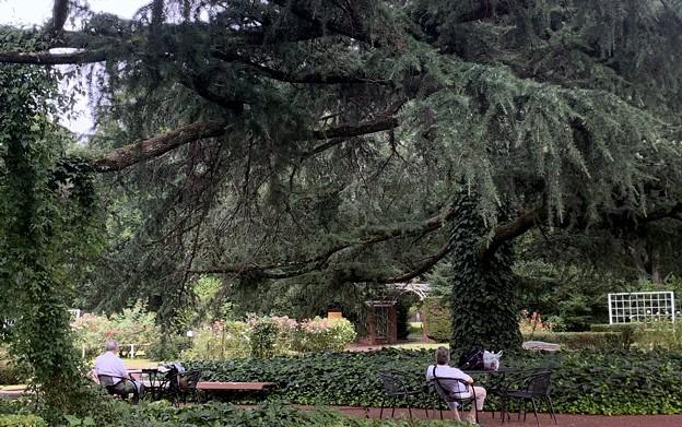 大きな樹の下で~