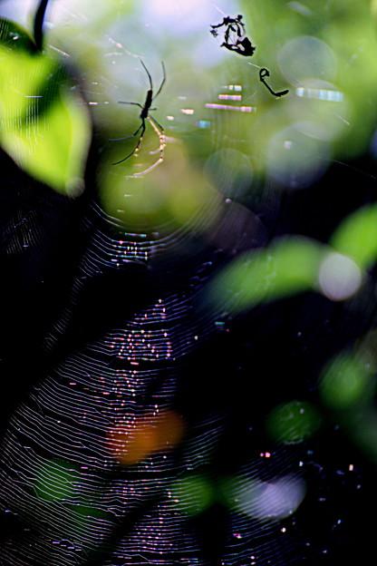 Photos: 初秋の彩