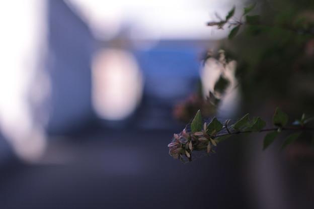 Last summer flowers