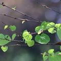 Photos: My heart is full of green hearts