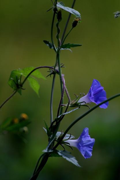 天然の活け花