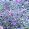 Photos: 咲いて、咲いて~!
