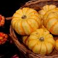 Photos: カボチャの季節