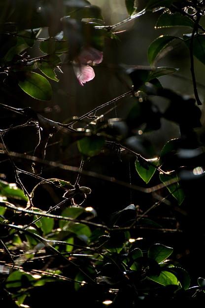 森に射す光