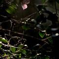Photos: 森に射す光