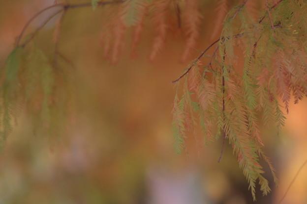 柔らかな秋に包まれて~