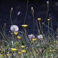 Photos: Daily life of weeds