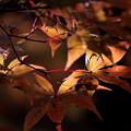 Photos: 晩秋の輝き