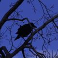 Photos: 青と黒