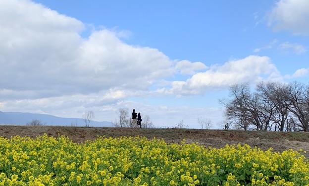 琵琶湖 春一番