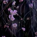 Photos: 花音~♪