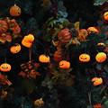 Photos: かぼちゃ