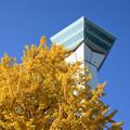 青空と五稜郭タワーとイチョウの木