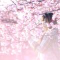 写真: 桜色に佇む