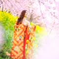 Photos: 桜の舞
