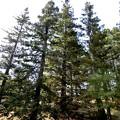 シアトルの森5