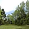 シアトルの森1