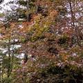 シアトルの森 15