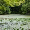 長谷池 4