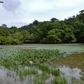 長谷池 3