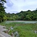 長谷池 2