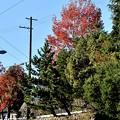 公園の紅葉 4