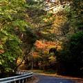 Photos: 山道 1