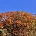 Photos: 山の黄葉4